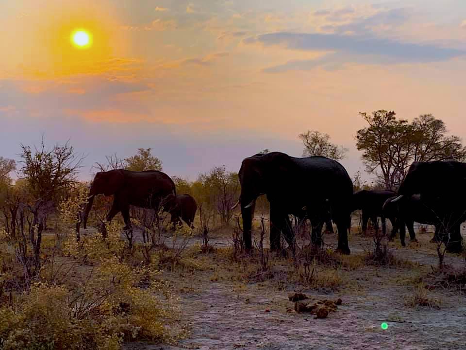 viaggio_zimbawe_botswana_africa