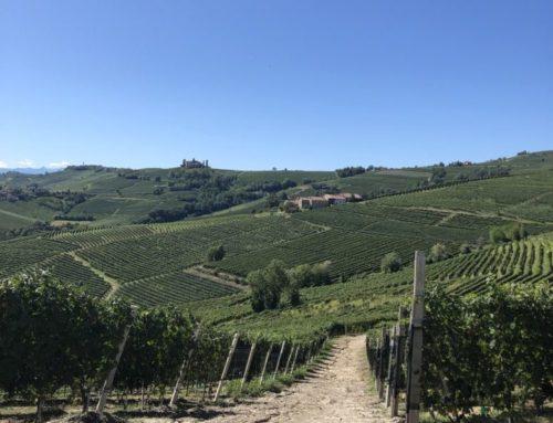 La strada del vino, itinerari per coppie ed amici, alla scoperta delle cantine, delle vigne e dei sapori