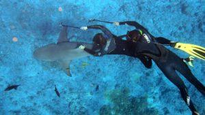 nuotare con squali