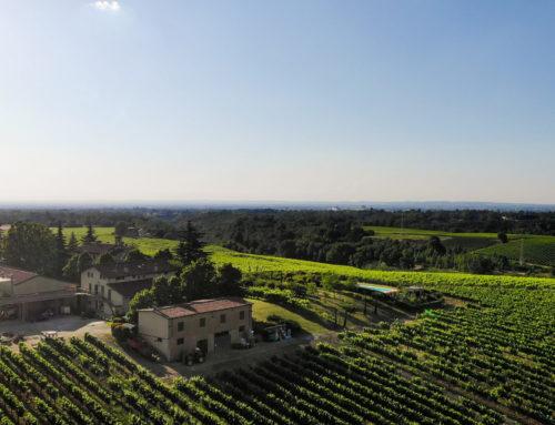 Passeggiando tra le vigne